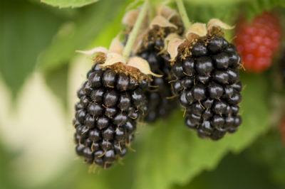berry health benefits symposium may 7th 9th 2019 portland oregon